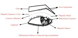 Ojos_Diseccion